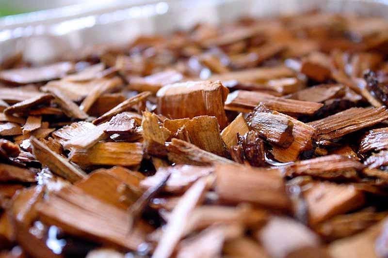 Wood Chips Molhar